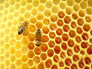Madu dan lebah